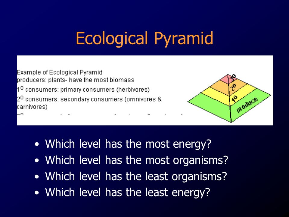 Which level has the most energy. Which level has the most organisms.
