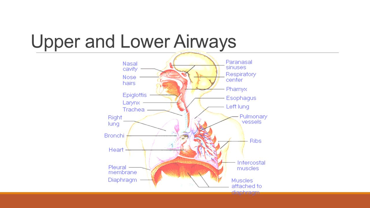 Basic Airway ABDULLAH ALSAKKA EM CONSULTANT. Objectives Review ...