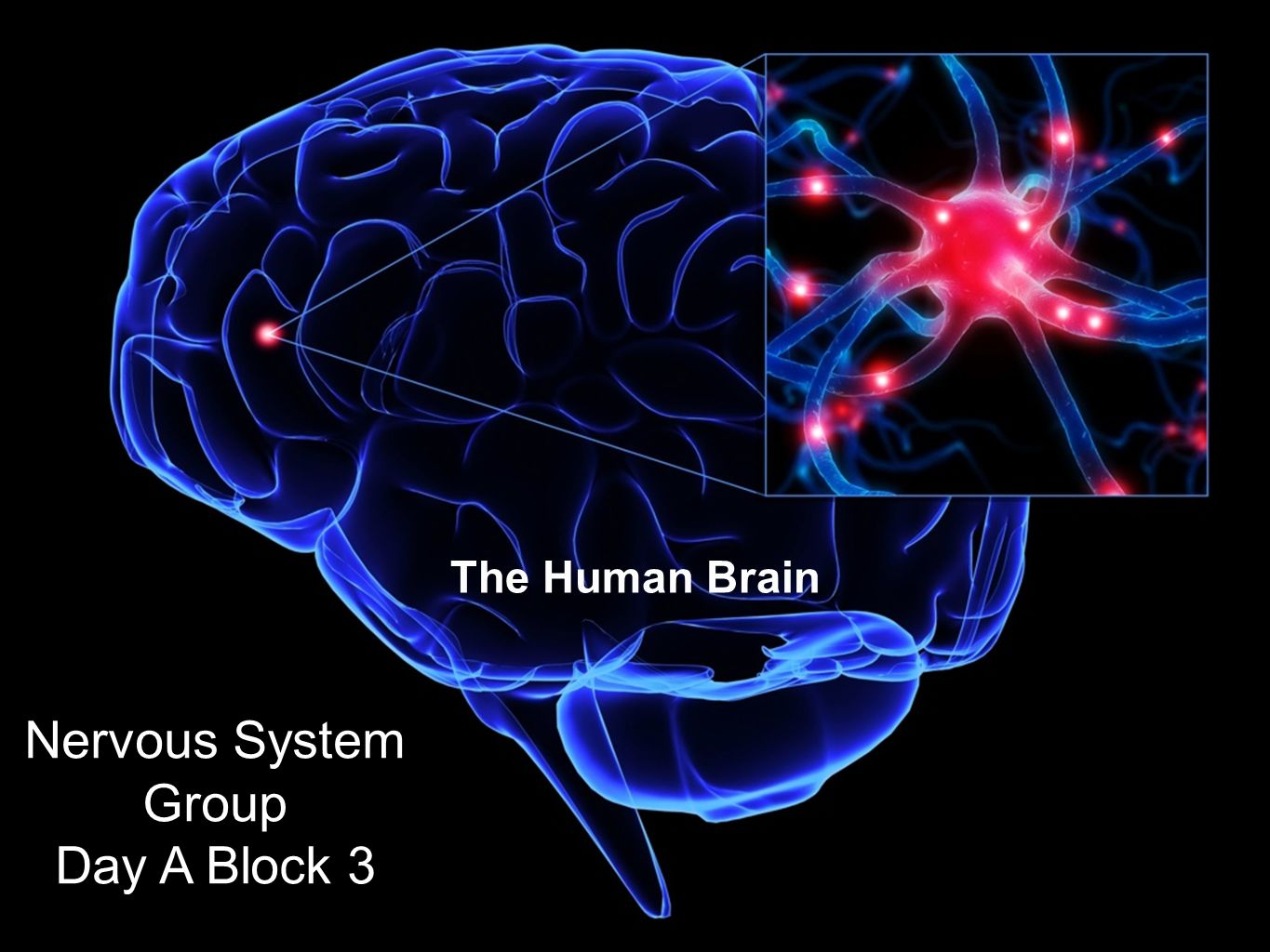 The Human Brain Nervous System Group Day A Block ppt download