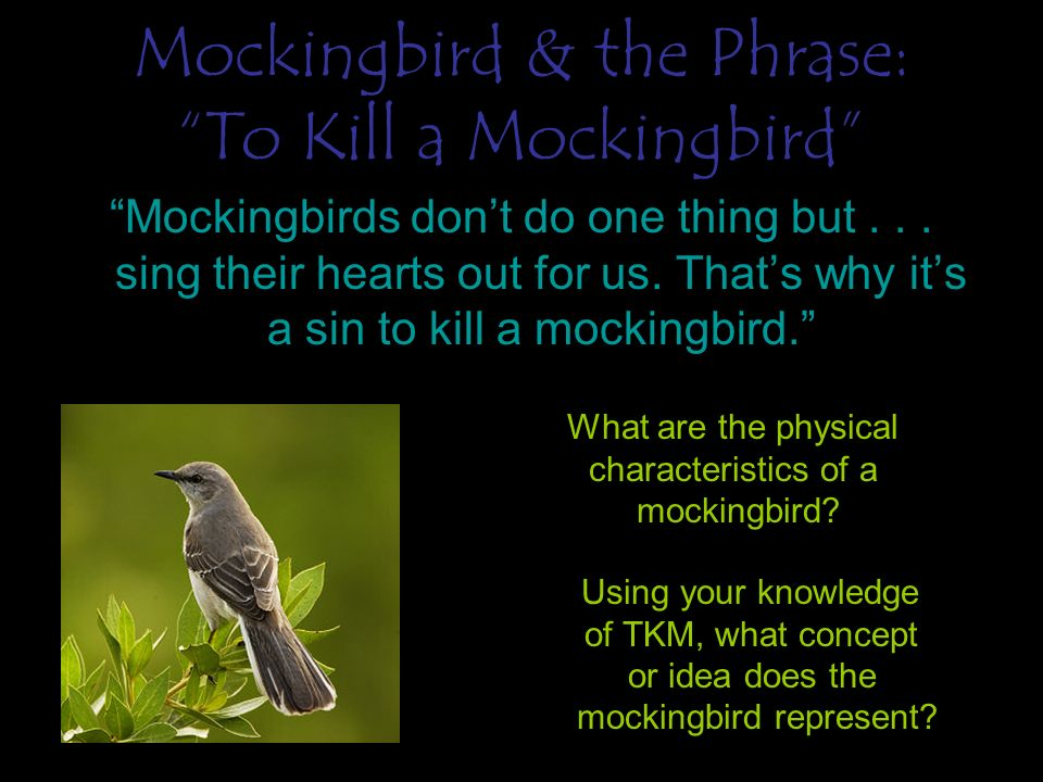 standing up for what you believe in to kill a mockingbird We will write a custom essay sample on how real courage is shown in 'to kill a mockingbird' essay specifically for you for only $1638 $139/page order now.
