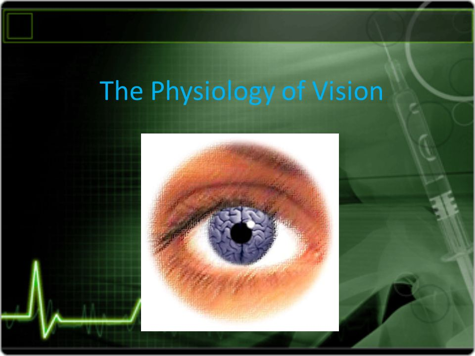 The Physiology Of Vision Anatomy Of The Eye 1 Sclera Is The Outer