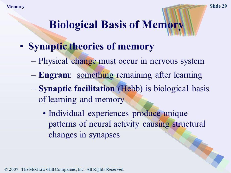 Memory biological basis of sexual orientation