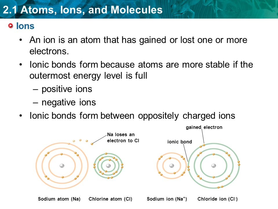 2.1 Atoms, Ions, and Molecules Ions An ion is an atom that has gained or lost one or more electrons.