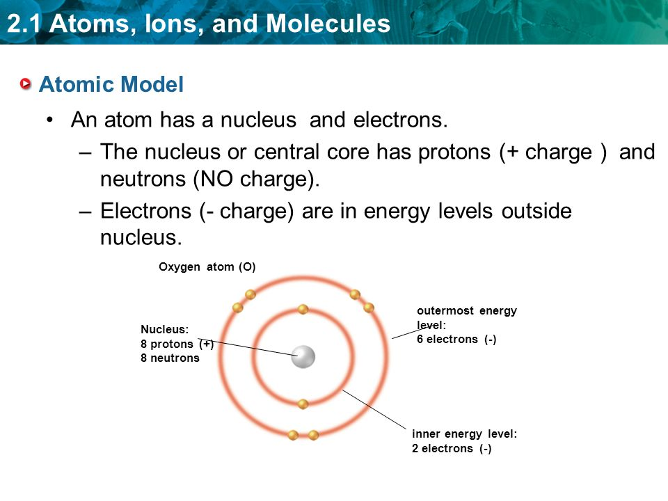 2.1 Atoms, Ions, and Molecules Atomic Model Oxygen atom (O) Nucleus: 8 protons (+) 8 neutrons outermost energy level: 6 electrons (-) inner energy level: 2 electrons (-) An atom has a nucleus and electrons.