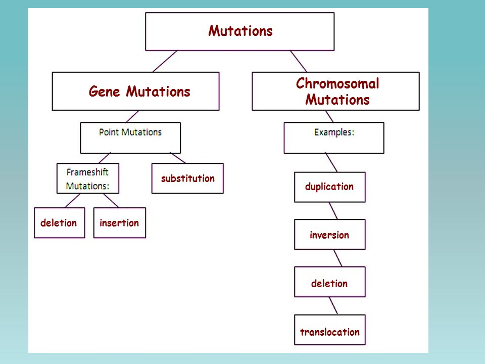 Mutation Concept Map.Study The Diagram Below And Be Prepared To Answer The Following