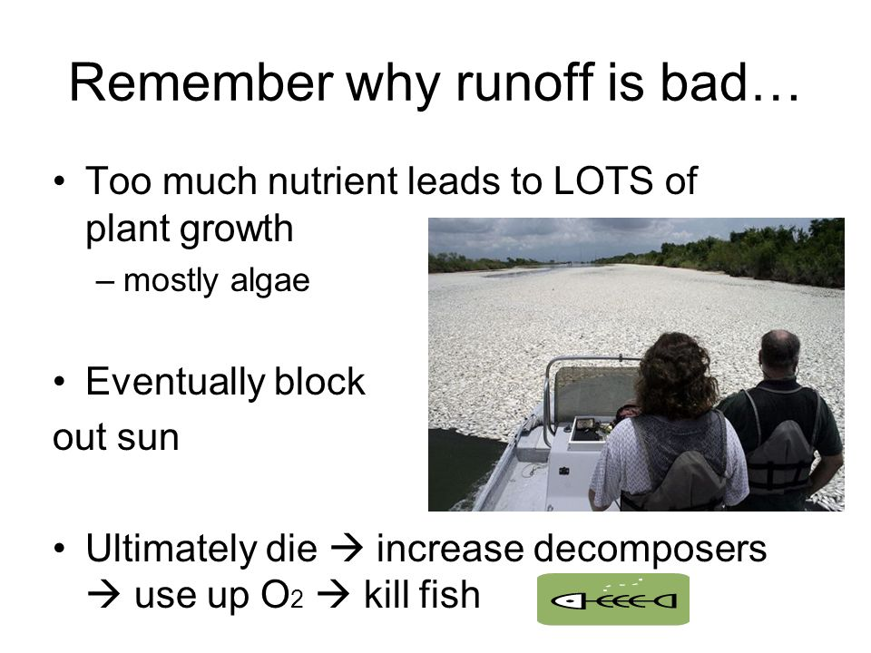 Remember why runoff is bad… Too much nutrient leads to LOTS of plant growth –mostly algae Eventually block out sun Ultimately die  increase decomposers  use up O 2  kill fish