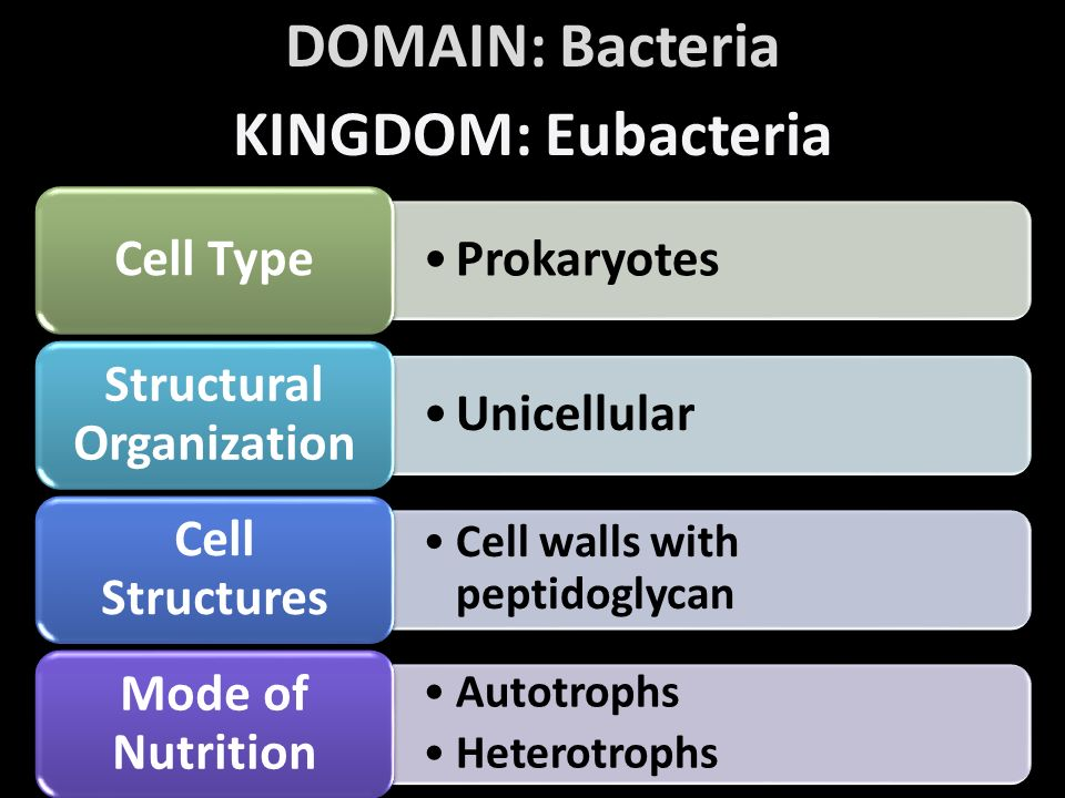 Structural Organization Cell Walls With Peptidoglycan Cell Structures Autotrophs Heterotrophs Mode Of Nutrition Domain Bacteria Kingdom Eubacteria