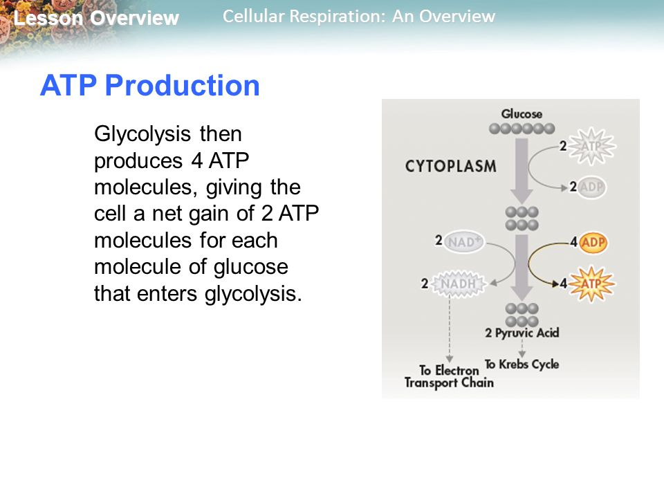 lesson 20 control of cell destiny This channel is made up of certain proteins that control the movement of molecules,  nucleus- the nucleus is the control center of the cell.