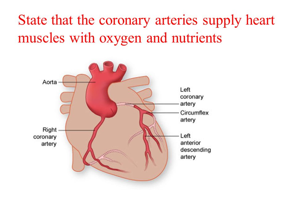 Topic 6 62 transport system draw and label a diagram of the heart 4 state that the coronary arteries supply heart ccuart Gallery