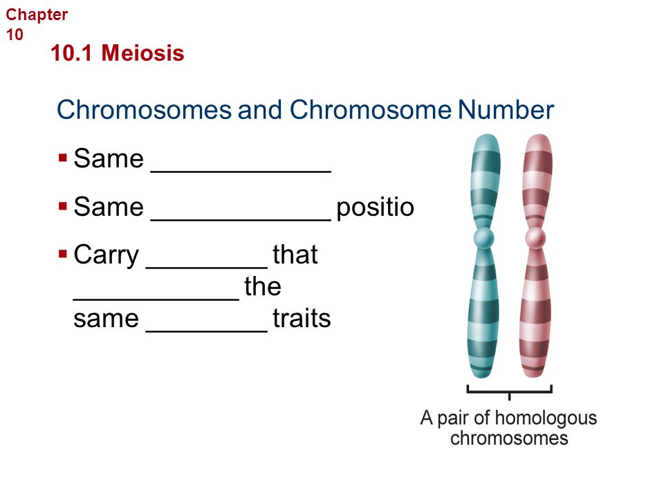 Definitions: Chromosomes: _____ all the __________ that is _________ from one __________ to the next.