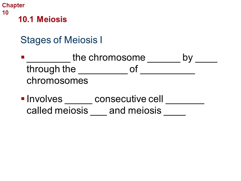 Meiosis I  The _______ life cycle in animals involves _________.