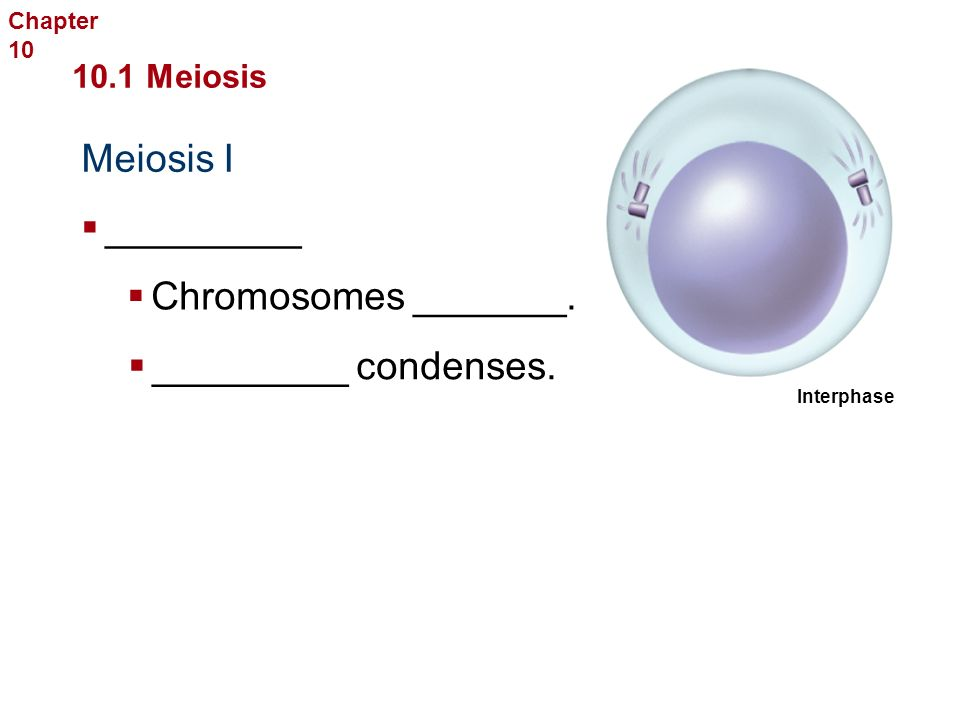 Stages of Meiosis I  ________ the chromosome ______ by ____ through the _________ of __________ chromosomes Sexual Reproduction and Genetics  Involves _____ consecutive cell _______ called meiosis ___ and meiosis ____ 10.1 Meiosis Chapter 10
