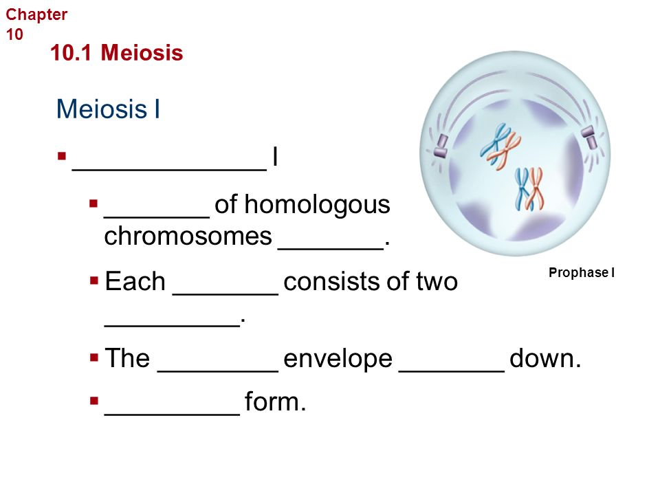 Meiosis I Sexual Reproduction and Genetics 10.1 Meiosis  _________  Chromosomes _______.