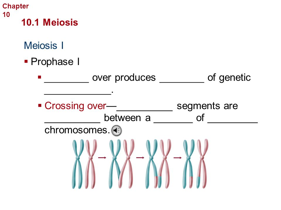 Meiosis I Sexual Reproduction and Genetics 10.1 Meiosis  _____________ I  _______ of homologous chromosomes _______.