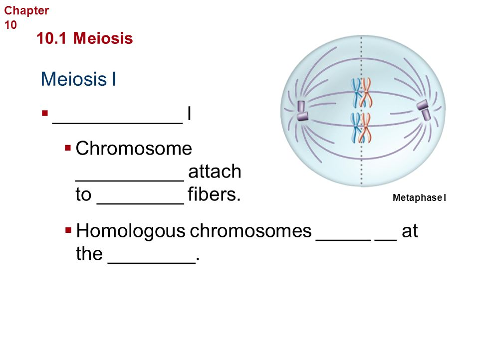 Meiosis I Sexual Reproduction and Genetics 10.1 Meiosis  Prophase I  ________ over produces ________ of genetic ____________.