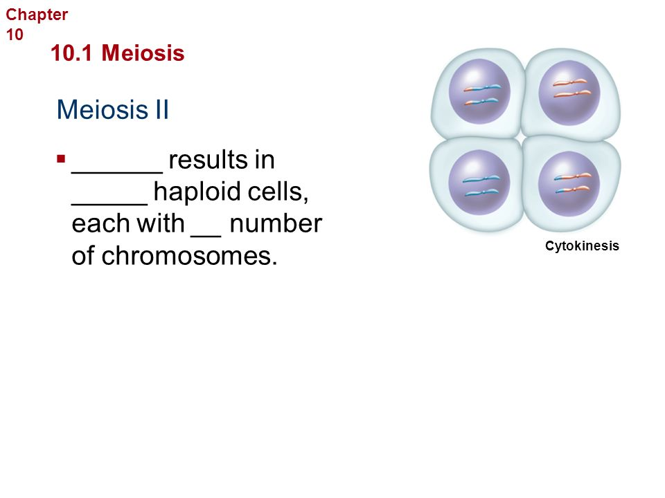 Sexual Reproduction and Genetics 10.1 Meiosis Meiosis II Chapter 10  __________ II  The chromosomes ______ the poles, and the nuclear ______ and nuclei ________.