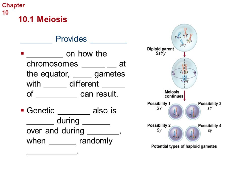 The ______________ of Meiosis  Meiosis consists of ____ sets of _________ Sexual Reproduction and Genetics  _______ four ______ daughter cells that are _______ identical 10.1 Meiosis  _________ in genetic ____________ Chapter 10