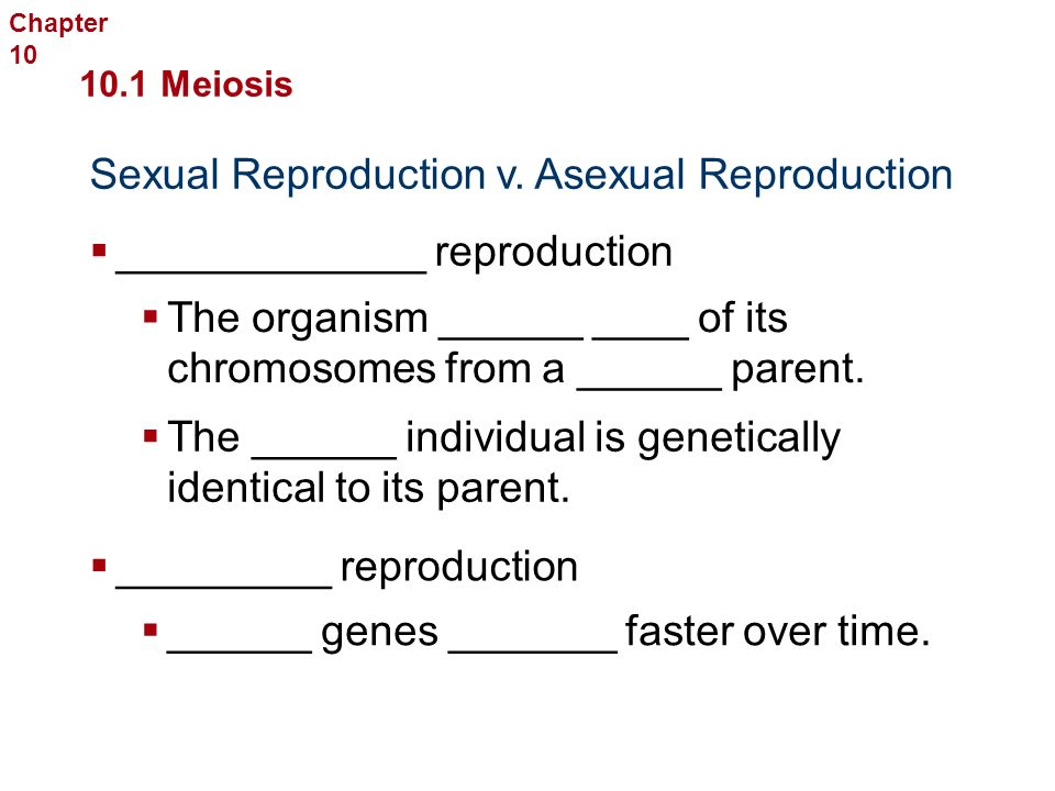 Sexual Reproduction and Genetics _______ Provides ________  ________ on how the chromosomes _____ __ at the equator, ____ gametes with _____ different _____ of _________ can result.
