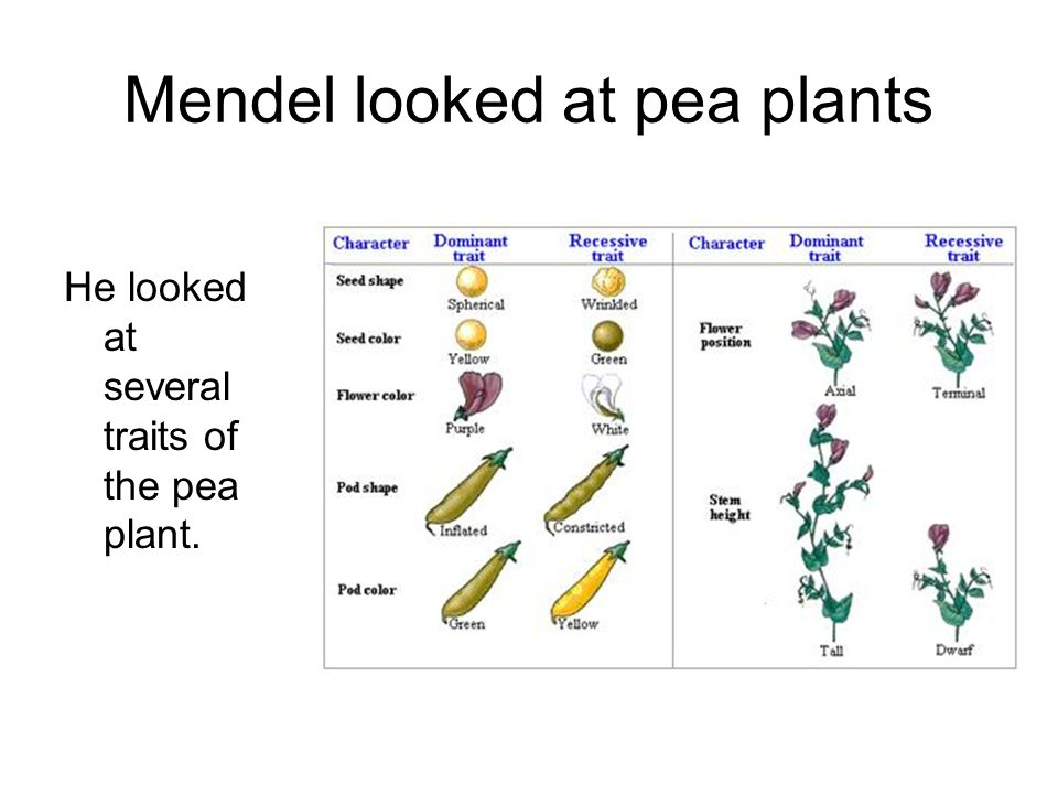 Mendel Mendel was able to ______ some _____ laws of genetics.