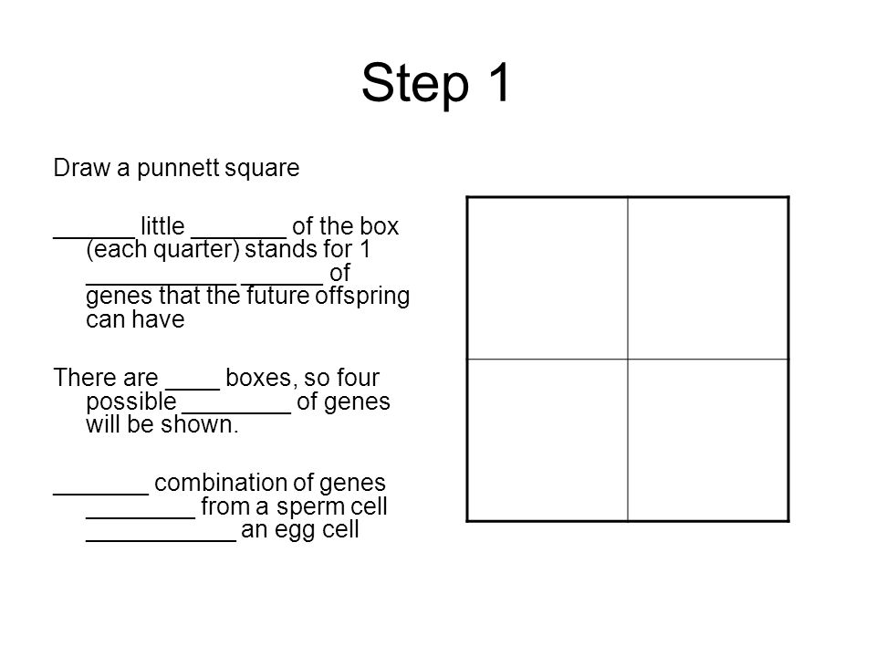 Follow these steps to determine the possible combinations of genes a child could have.