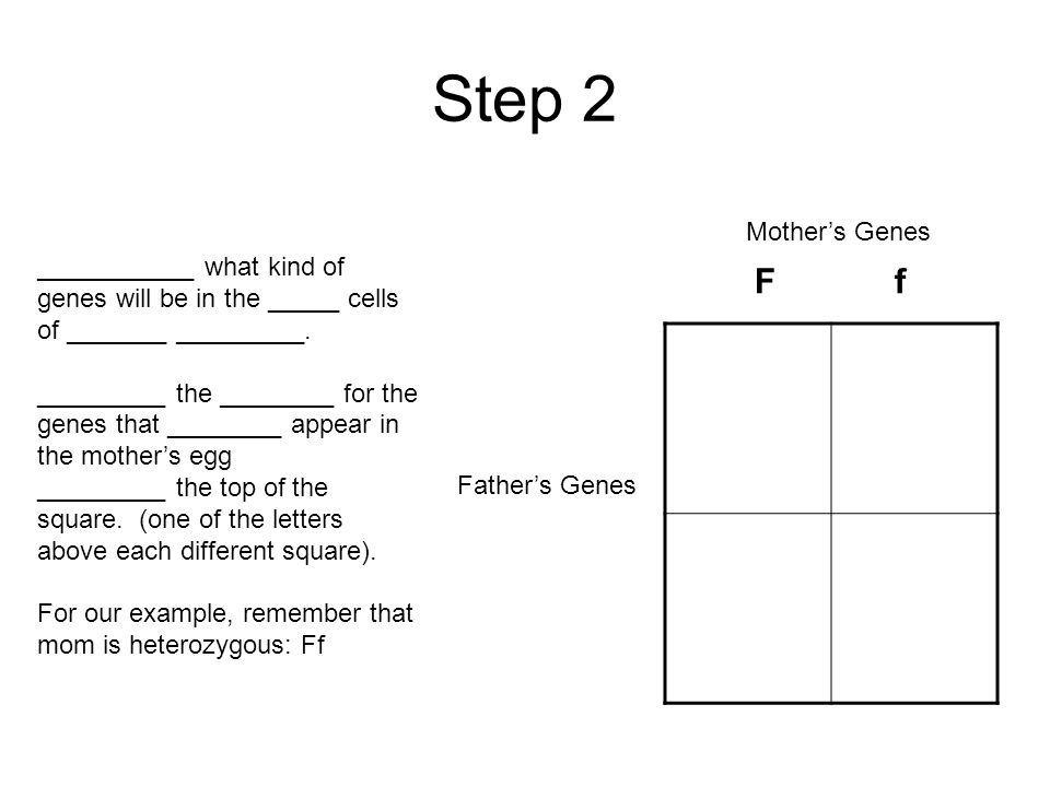 Step 1 Draw a punnett square ______ little _______ of the box (each quarter) stands for 1 ___________ ______ of genes that the future offspring can have There are ____ boxes, so four possible ________ of genes will be shown.