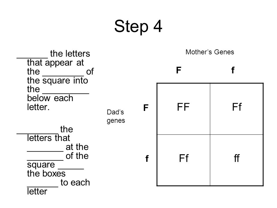 Step 3 Mother's Genes Father's Genes Now, _______ the letters for the genes that _______ appear in the father's sperm ______ the side of the square.