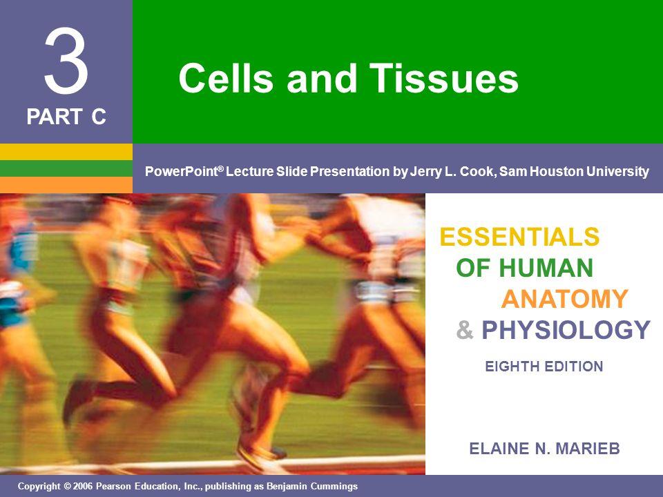 ELAINE N. MARIEB EIGHTH EDITION 3 Copyright © 2006 Pearson Education ...