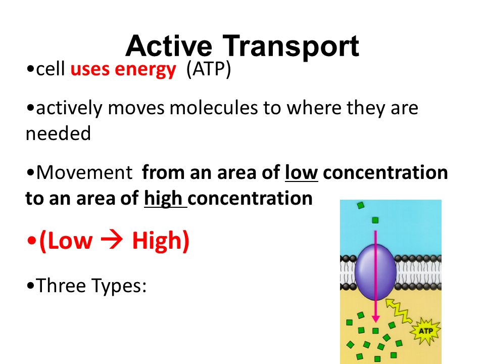 Active Transport cell uses energy (ATP) actively moves molecules to where they are needed Movement from an area of low concentration to an area of high concentration (Low  High) Three Types:
