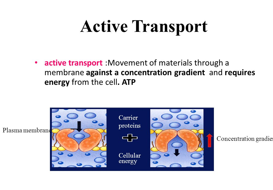 Active Transport Cellular Structure and Function  Movement of particles across the cell membrane using energy Active Transport Using Carrier Proteins