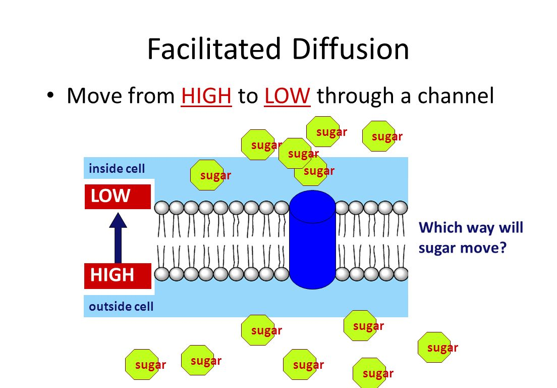 Simple Diffusion Move from HIGH to LOW inside cell outside cell Which way will fat move.