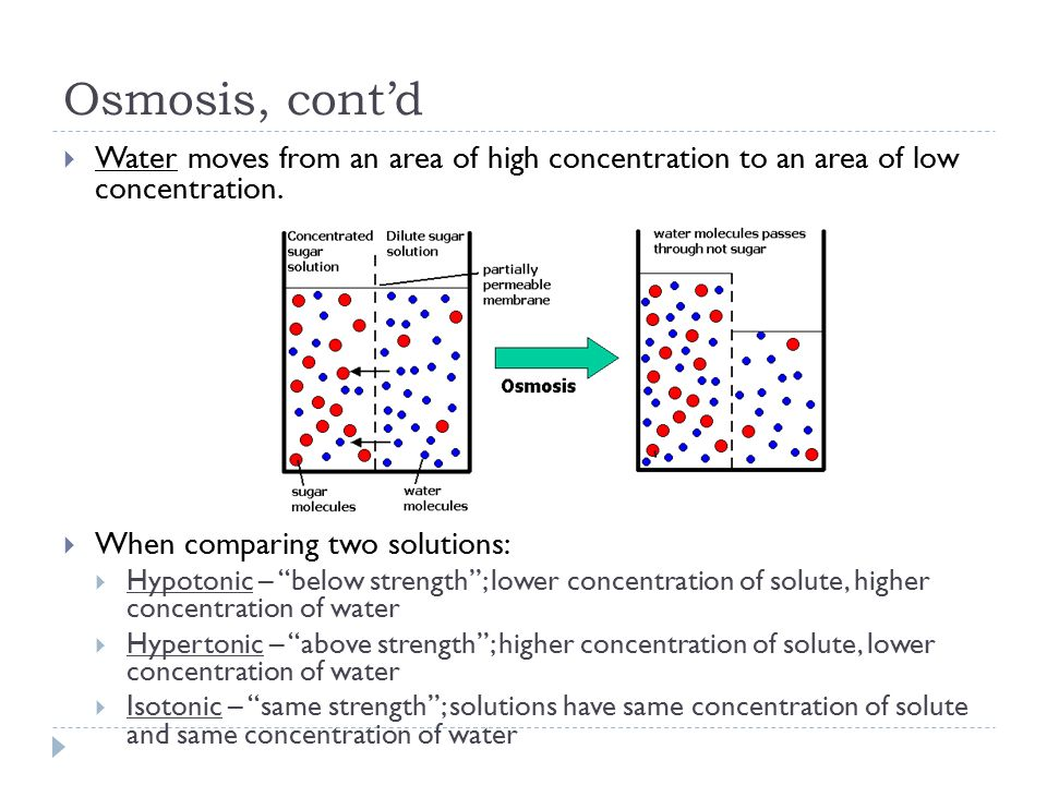 sample abstract on osmosis and diffusion Describe the physical mechanisms of diffusion and osmosis understand the relationship between surface area and rate of diffusion describe how molar concentration affects the process of diffusion.