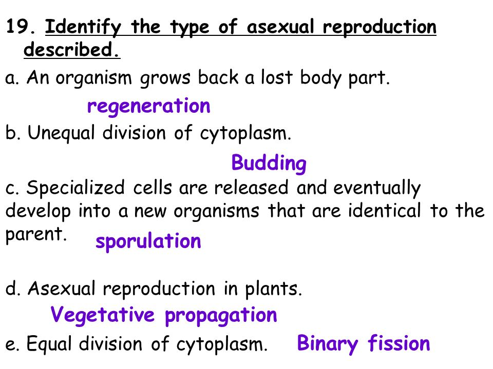 Sporulation asexual reproduction worksheet