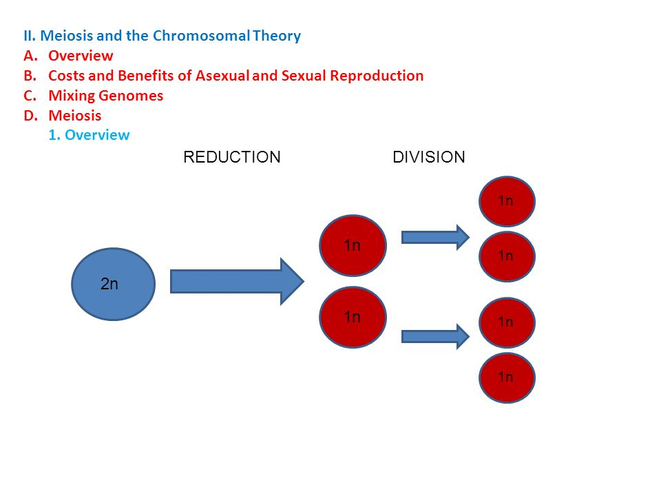 Advantages of plasmodium reproducing asexually