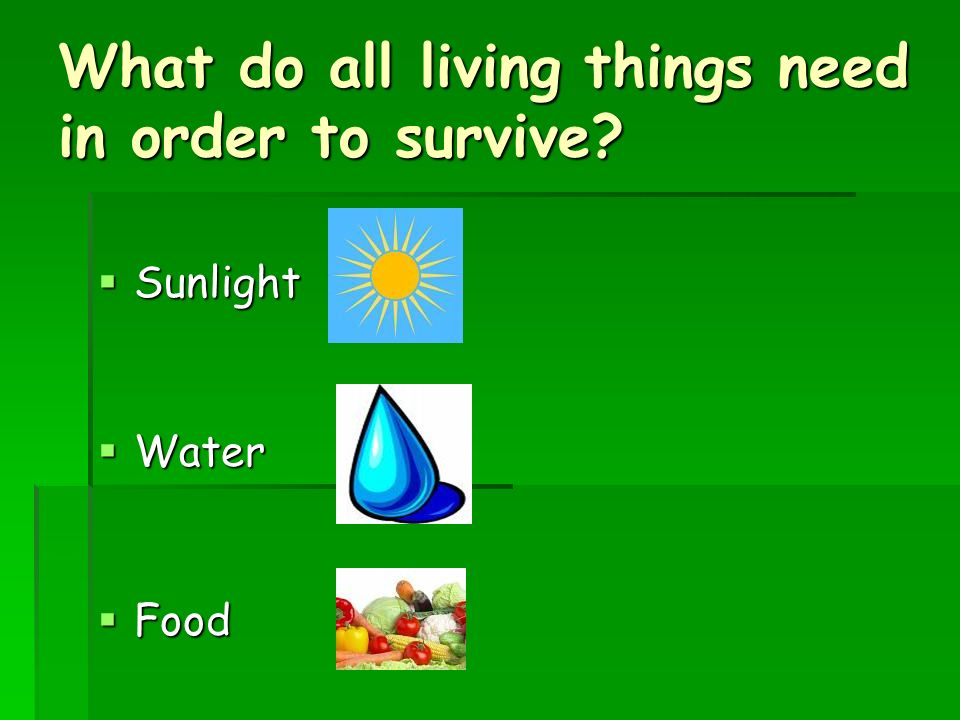What do all living things need in order to survive  Sunlight  Water  Food