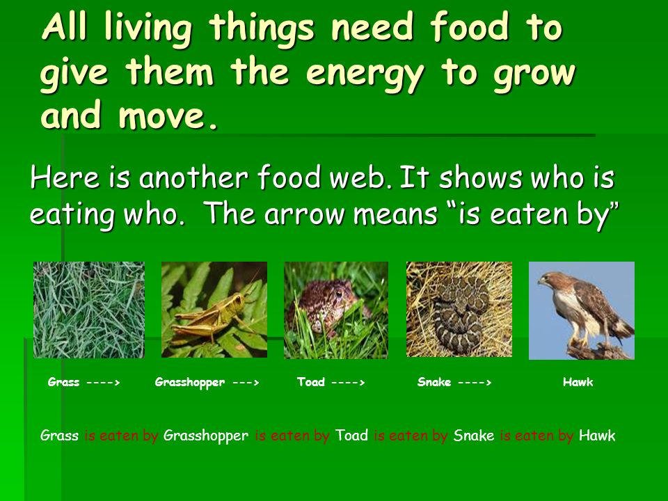 All living things need food to give them the energy to grow and move.