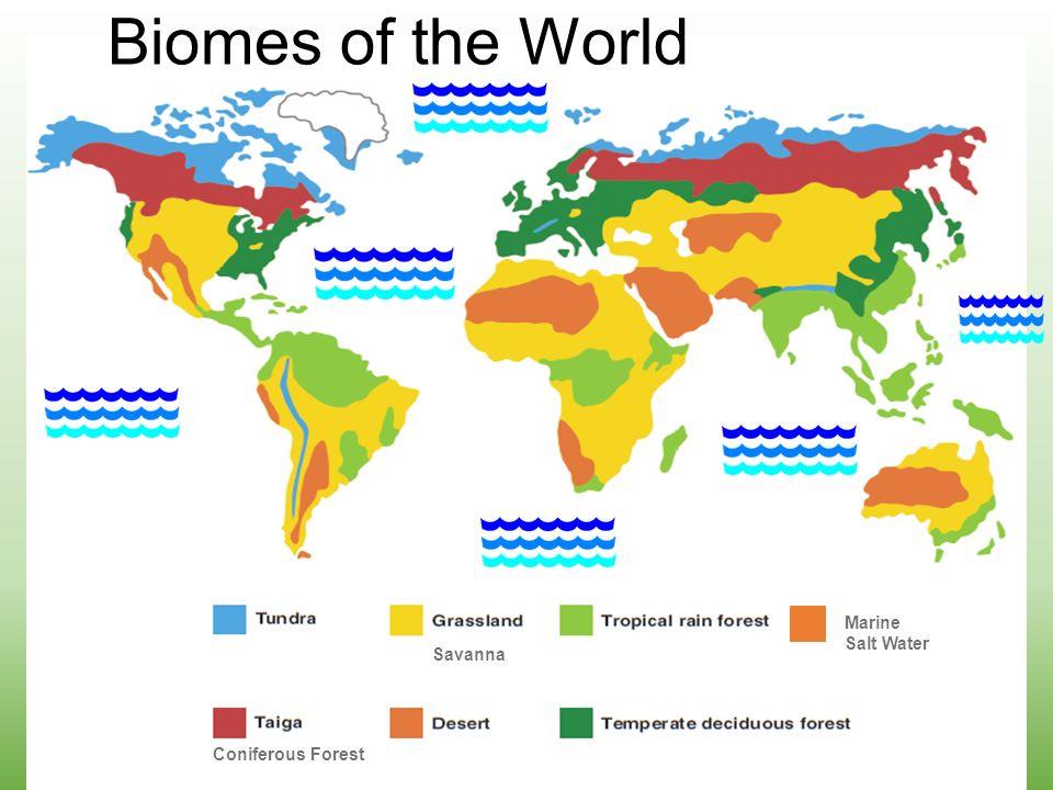 Biomes of the World Marine Salt Water Coniferous Forest Savanna