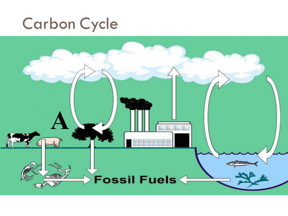 Fuels cycle fossil carbon Ch 7.