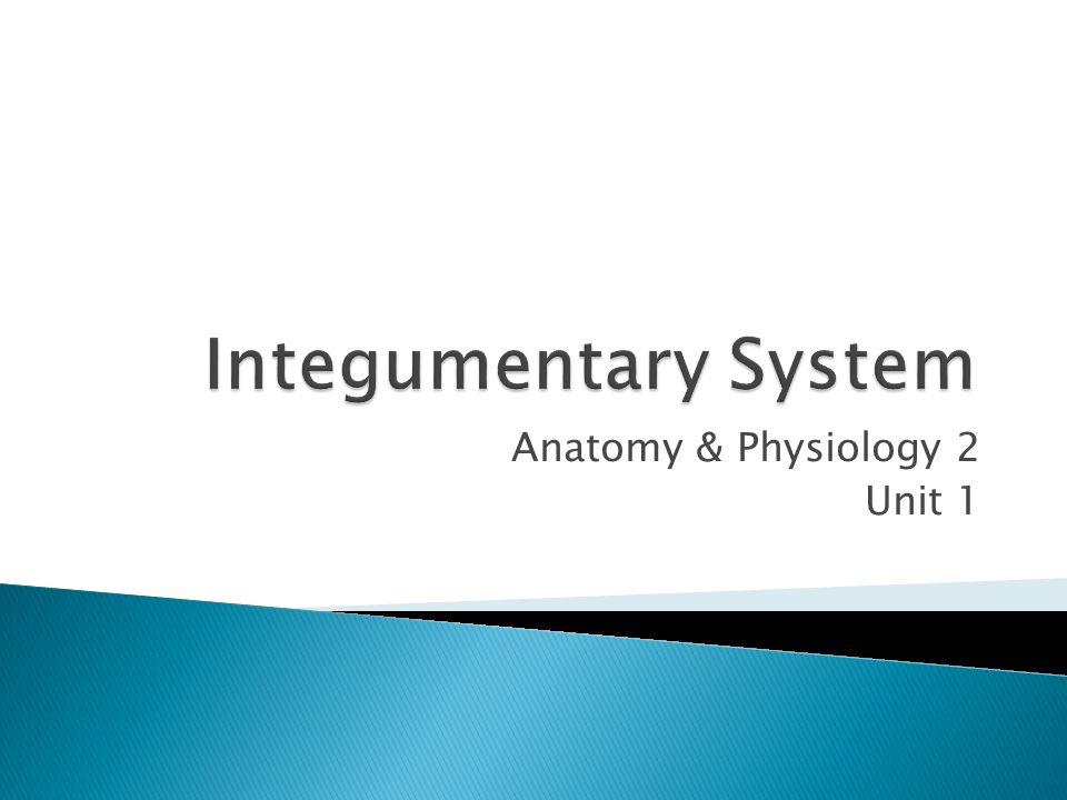 Anatomy & Physiology 2 Unit 1.  Called the integument (meaning ...