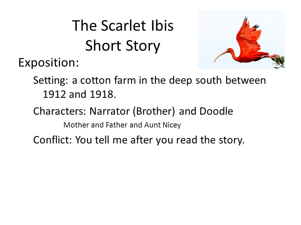 what is the setting of the scarlet ibis