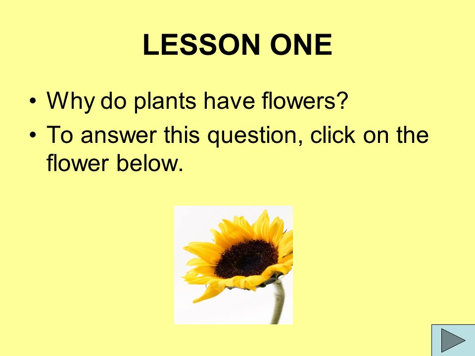 4 LESSON ONE Why do plants have ...