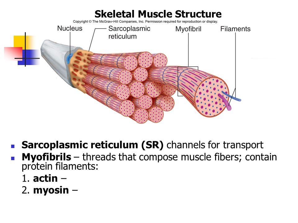 Fascia Muscle Structure - Wiring Diagrams •