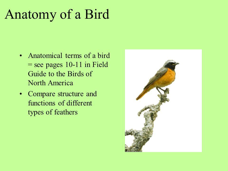 Ecology Of Birds Identification Behavior And Attracting Birds