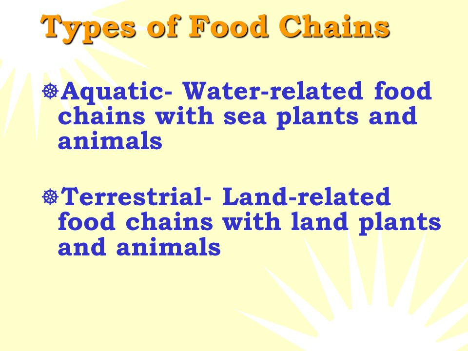 Let's Look at a Food Chain  A food chain is a simplified way to look at the energy that passes from producers to consumers.