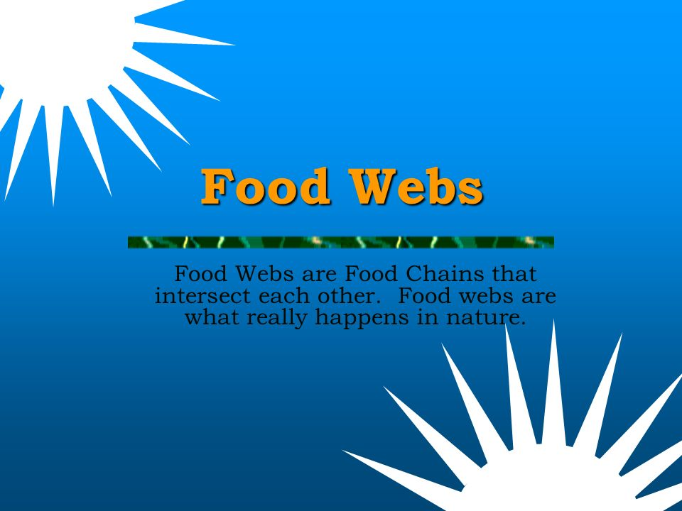 Food Webs  How many food chains can you make from this food web