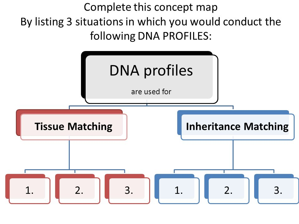 DNA Reinforcement Activities. Complete this concept map By listing on