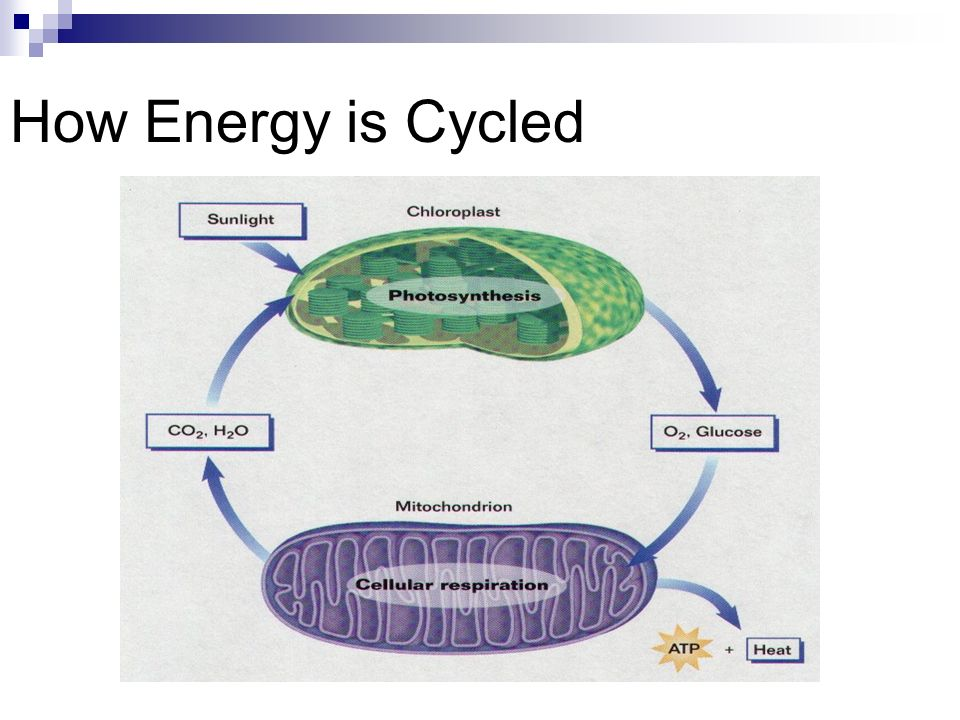 How Energy is Cycled