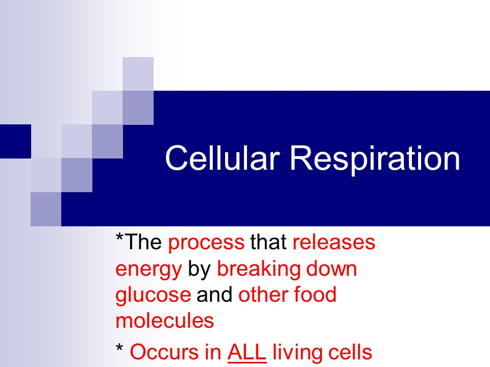 Cellular Respiration * The process that releases energy by breaking down glucose and other food molecules * Occurs in ALL living cells