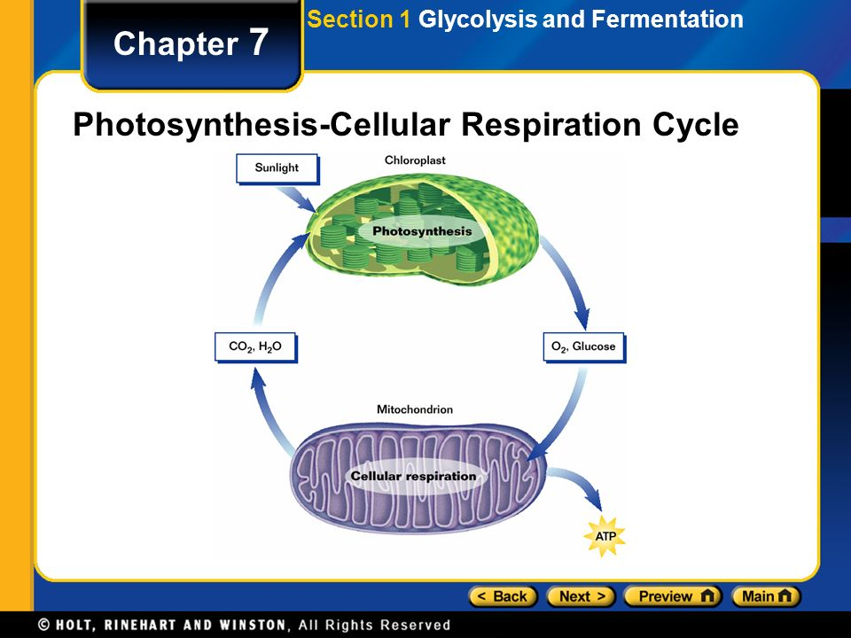 Cellular respiration chapter 7 table of contents section 1 4 chapter 7 photosynthesis cellular respiration cycle section 1 glycolysis and fermentation ccuart Image collections