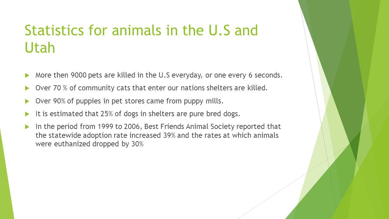 Animal Rights Michael Palyka  Animal rights in Utah