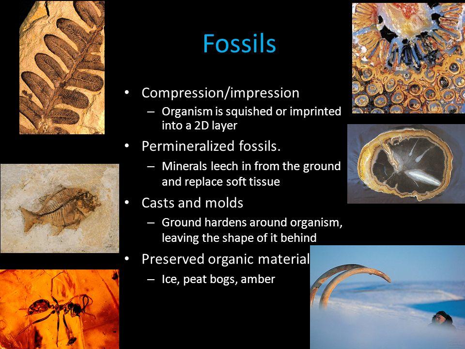 Evidence in soft the tissue hardens dinosaur fossils Dino rib